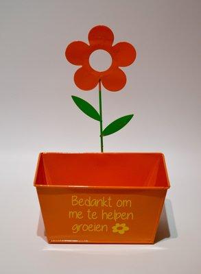 Oranje bloempotje